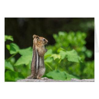 Praying Chipmunk Card