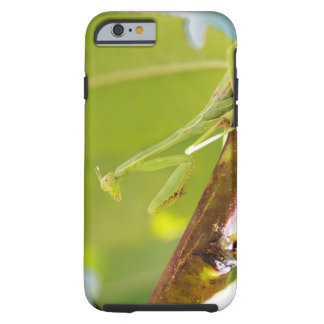 Praying Mantis iPhone 6 Phone Case