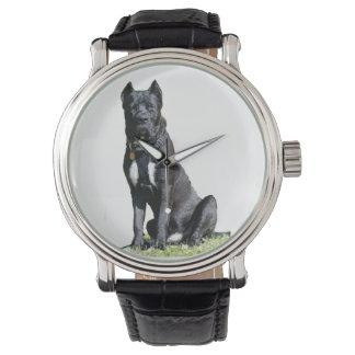Presa Canario Watch