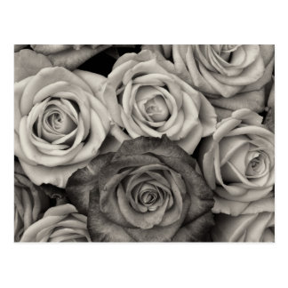 Pretty Black and White Roses Bouquet of Flowers Postcard