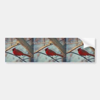 Pretty Boy Male Cardinal Bumper Sticker