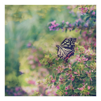 Pretty Butterfly Orange White Black Pink Flowers Poster