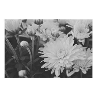 Pretty Flowers Photo Art