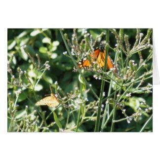 Pretty Monarch  Butterflies Note Card