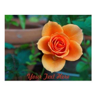 Pretty Orange Flower Postcard