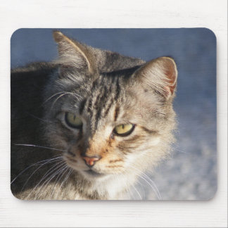 Pretty tabby cat with gold eyes mouse pad