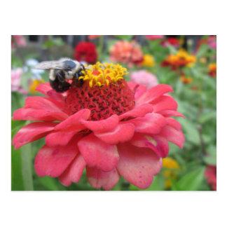 Pretty Zinnia with Bee Postcard
