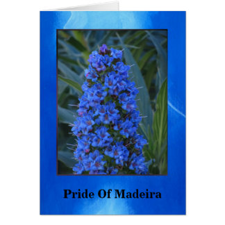 Pride of Madeira Flower Card
