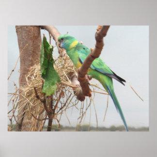 Princess Parrot Bird Poster