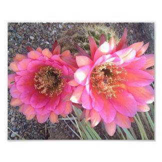 Print Art Photo Pink Cactus Flower