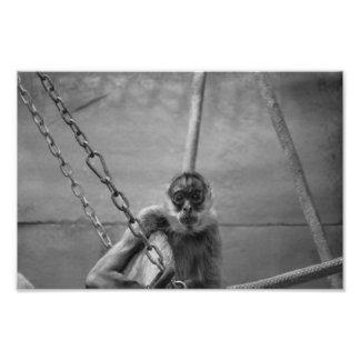 Prison Monkey Photo Print