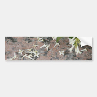 Privet Blossoms on Granite Bumper Sticker