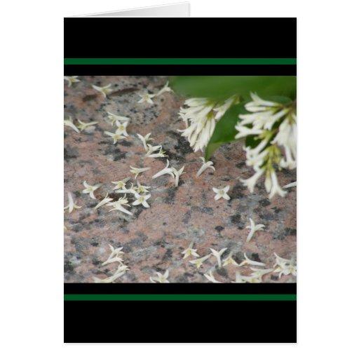 Privet Blossoms on Granite Cards