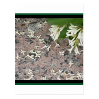 Privet Blossoms on Granite Post Card
