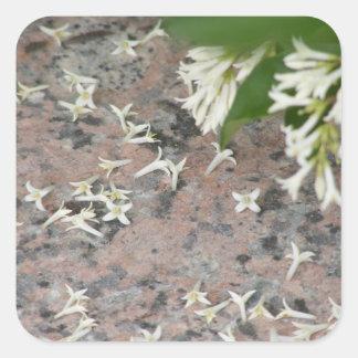 Privet Blossoms on Granite Sticker