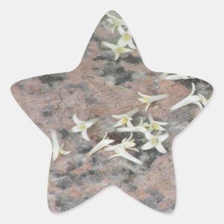 Privet Blossoms on Granite Star Sticker