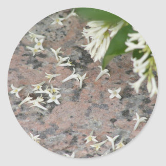 Privet Blossoms on Granite Stickers