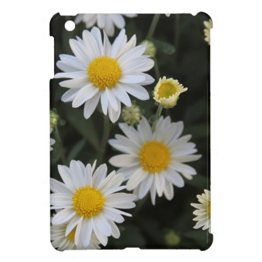 Profusion Of White Daisy Mums Case For The iPad Mini