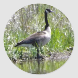 Proud Goose Classic Round Sticker
