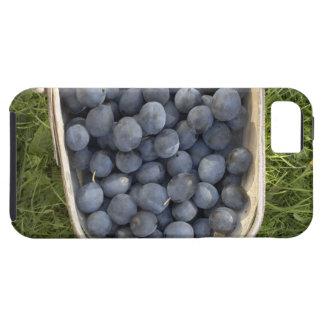 Prunus domestica, Damsons Case For The iPhone 5
