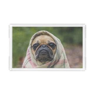 Pug Acrylic Tray