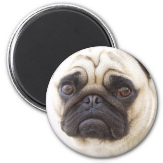 Pug Dog  Round Magnet Fridge Magnet