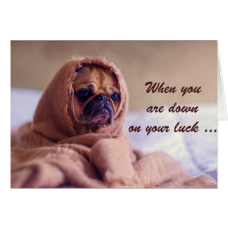 Pug Dog Wapped in Sack, Down On Your Luck, Humor Card
