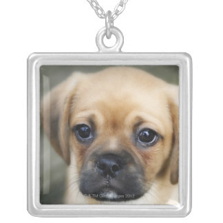 Pugalier Puppy Looking at Camera Silver Plated Necklace