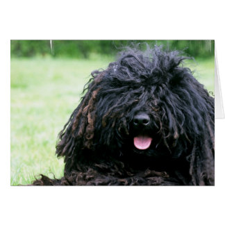 Puli Dog  Greeting Cards