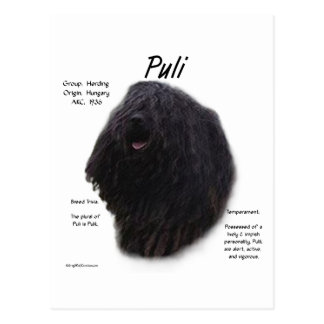 Puli History Design Postcard