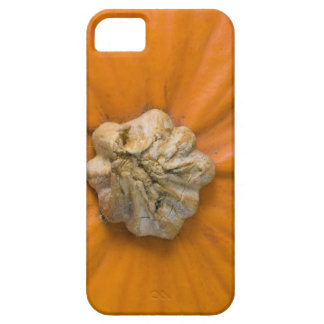 Pumpkin Head iPhone 5 Cases
