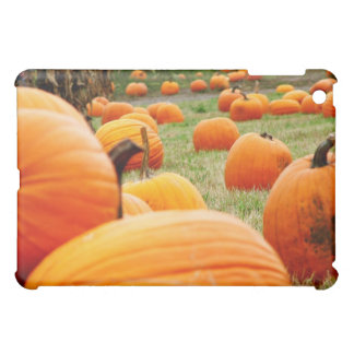 Pumpkin Patch Cover For The iPad Mini