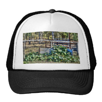 PUMPKIN PATCH RURAL QUEENSLAND AUSTRALIA CAP