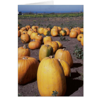 Pumpkins III Card