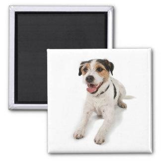 puppie square magnet