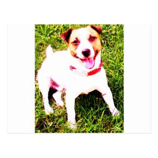 puppy dog, Jack Daniels Postcard