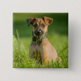 Puppy In The Grass 15 Cm Square Badge