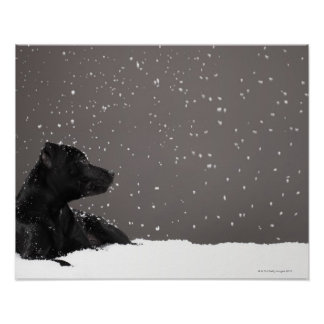 Puppy lying in snow watching snowflakes poster