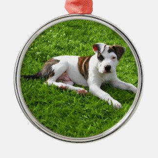 Puppy Pit Bull T-Bone Christmas Ornament