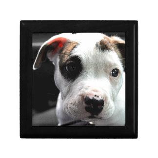 Puppy Pit Bull T-Bone Gift Box