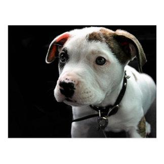Puppy Pit Bull T-Bone Postcard