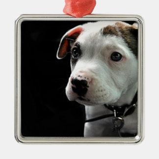 Puppy Pit Bull T-Bone Silver-Colored Square Decoration