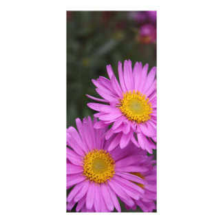 Puprle daisies full color rack card