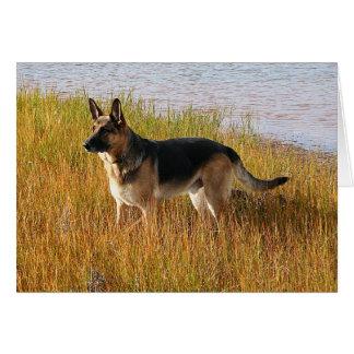 Pure Bred German Shepherd Photo on Note Card