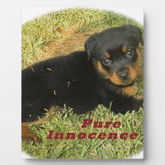 pureinnocence rottweiler puppy plaque
