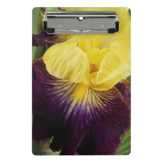 Purple and Yellow Iris Floral