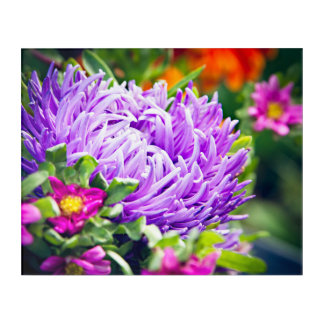 Purple Aster with Color Acrylic Print