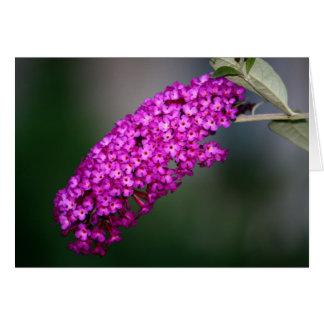 Purple Butterfly Bush Notecard