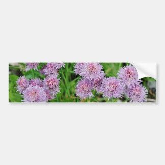 Purple Dahlia Flowers Growing Bumper Sticker
