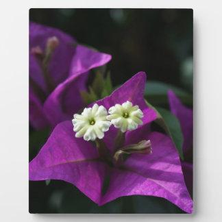 Purple Flower Plaques